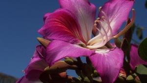 Цветы Индии фото