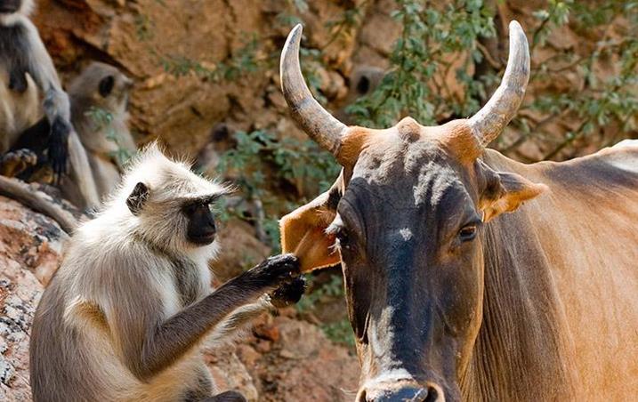 Животные Индии фото