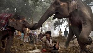 Индия сезон отдыха фото